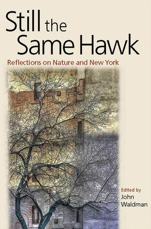 Still the Same Hawk Paperback  by John Waldman